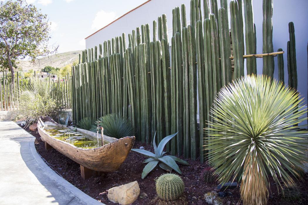 Jardines endémicos - Casa Don Luis Jardín Boutique - Oaxaca