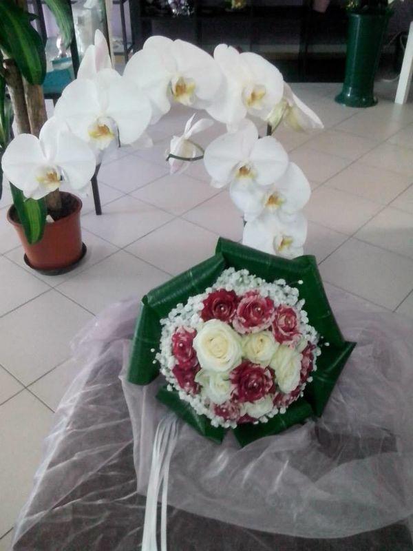 Fioricoltura La Gardenia