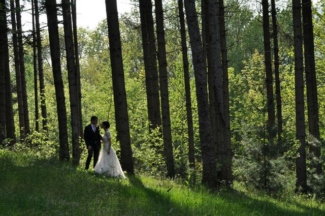 Le Pinete: il bosco magico