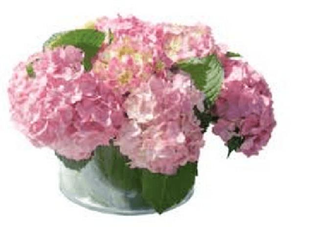 Fundaci n carmen pardo valcarce flores bodas - Fundacion carmen pardo valcarce ...
