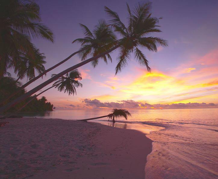 Podróż poślubna z Bon Voyage