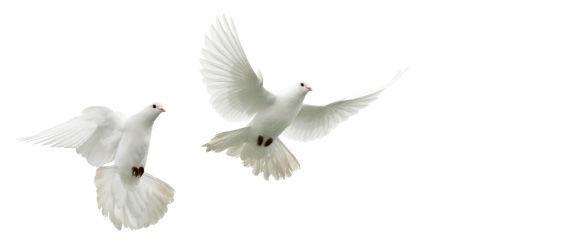 Beispiel: Weiße Tauben, Foto: Mückenschlösschen Leipzig.