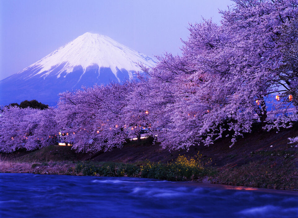 Giappone - Fioritura Ciliegi Monte Fuji -