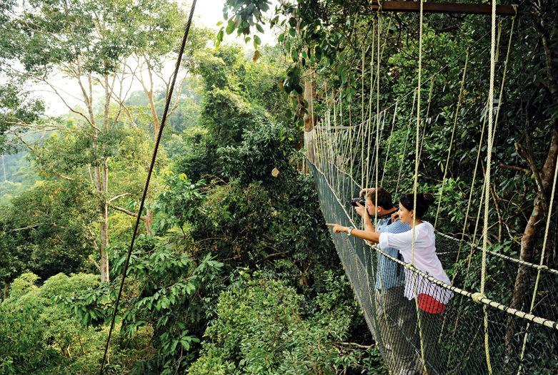Canopy-Walk im Taman Negara, Malaysia