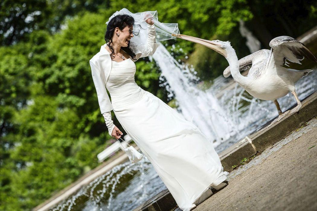 Hochzeitsreportage Berlin Friedrichtsfelde Tierpark, Braut mit Kormuran, Kormuran zieht am Schleier von einer Braut, lustige Hochzeitsfotos,