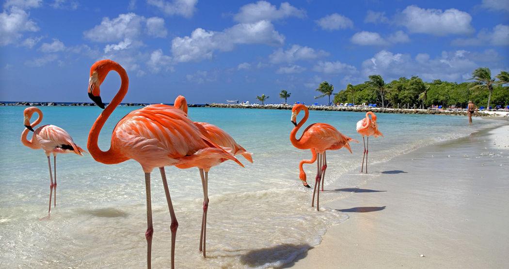 Fantastici Caraibi