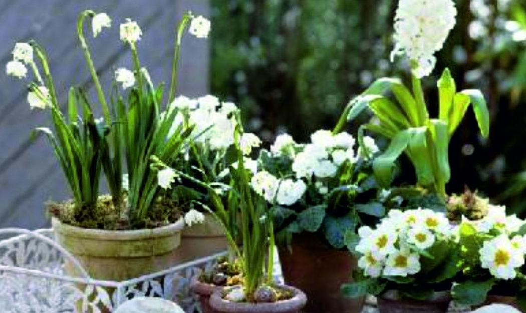Beispiel: Blumenideen, Foto: Blumen Komander.
