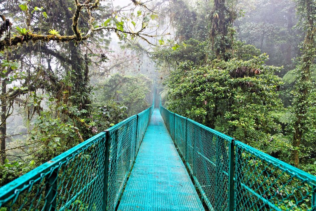 Traversez le pont et  rentrez dans cette forêt tropicale. Vous êtes au Costa Rica