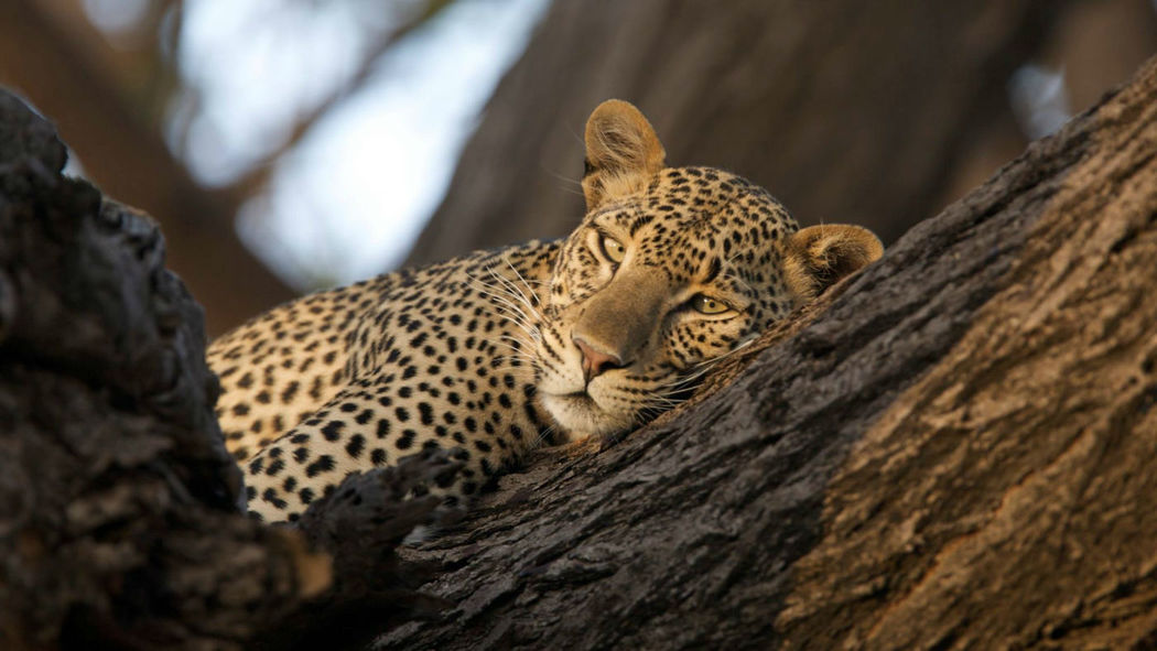 Beispiel: Kenia, Safari & Strand, Foto: Severin Travel.