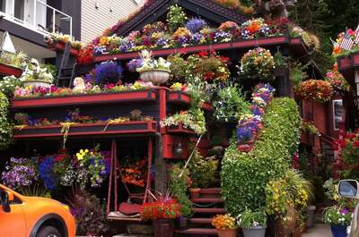 Kashmir Flowers House