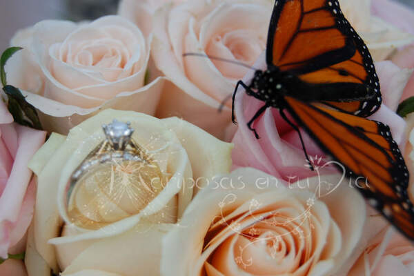 Mariposas en tu día