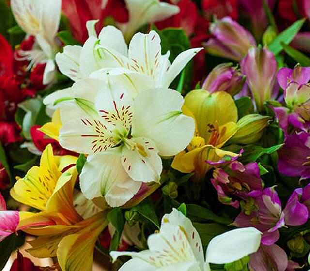 Beispiel: Farbenfrohe Blumenauswahl, Foto: BLOOMY DAYS.