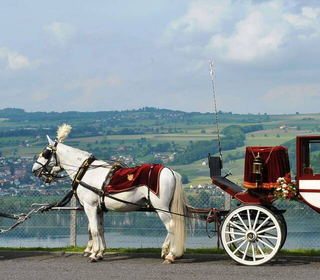 Königliche Hochzeitskutsche, 4-spännig mit goldenen Geschirren und Brokatdecken über dem Baldeggersee