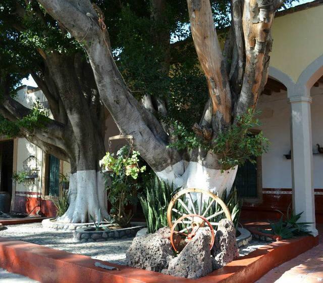 Ex Hacienda Capellania de Loera
