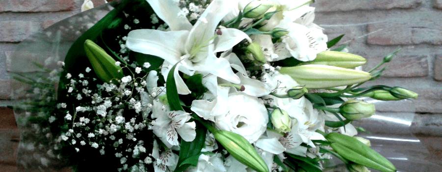 Flora Mangabeiras