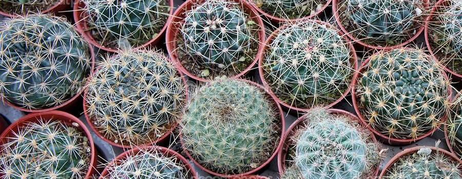 Cactusland