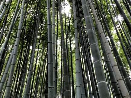 Bosco Di Bamb.Regalo Escursione A Arashima E Il Bosco Di Bambu Il