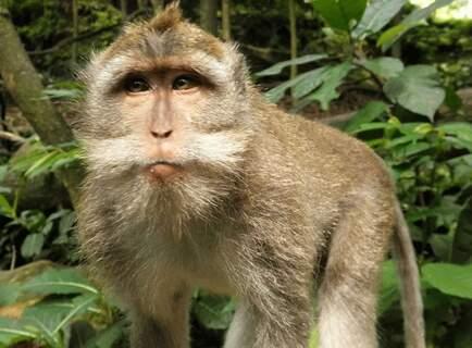 Visite de la forêt sacrée des singes | Ubud