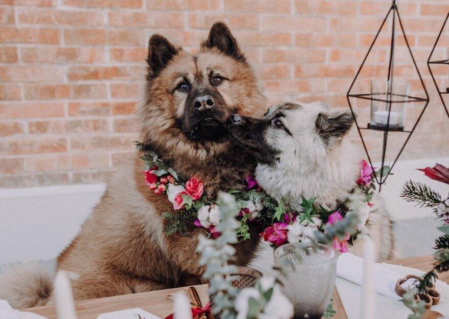 La creatividad de Cristina Vizcaíno triunfa con el divertido 'shooting' de una boda canina