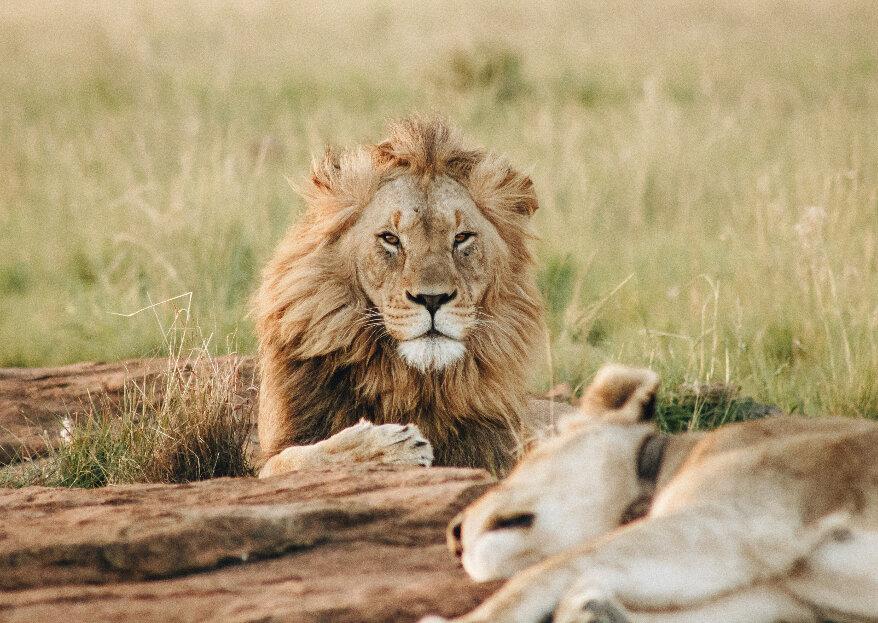 Os melhores passeios e safaris para uma lua-de-mel em África