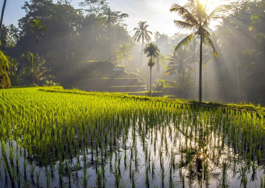 Lune de miel en Indonésie : partez à la découverte de l'île de Bali