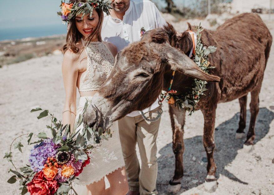 Mit Hochzeitsplanerin Sandra vernachlässigte Esel auf Santorini unterstützen