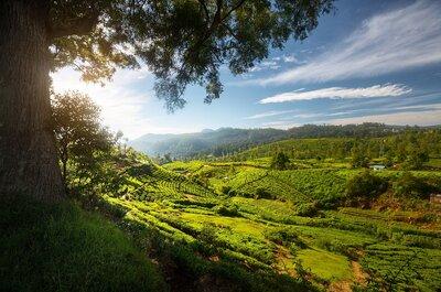 Lune de miel extra : du Sri Lanka aux Maldives, la combinaison idéale de la nature et de la culture