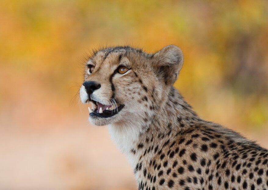 Botswana Holidays: 5 Reasons To Honeymoon In This African Paradise