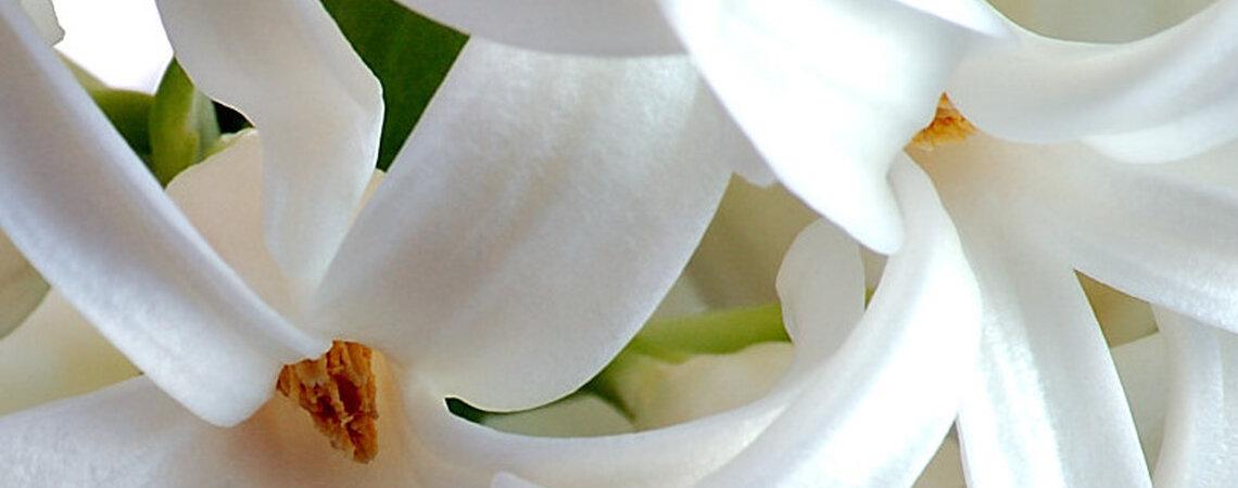 Fiori di stagione per le decorazioni nuziali for Decorazioni nuziali