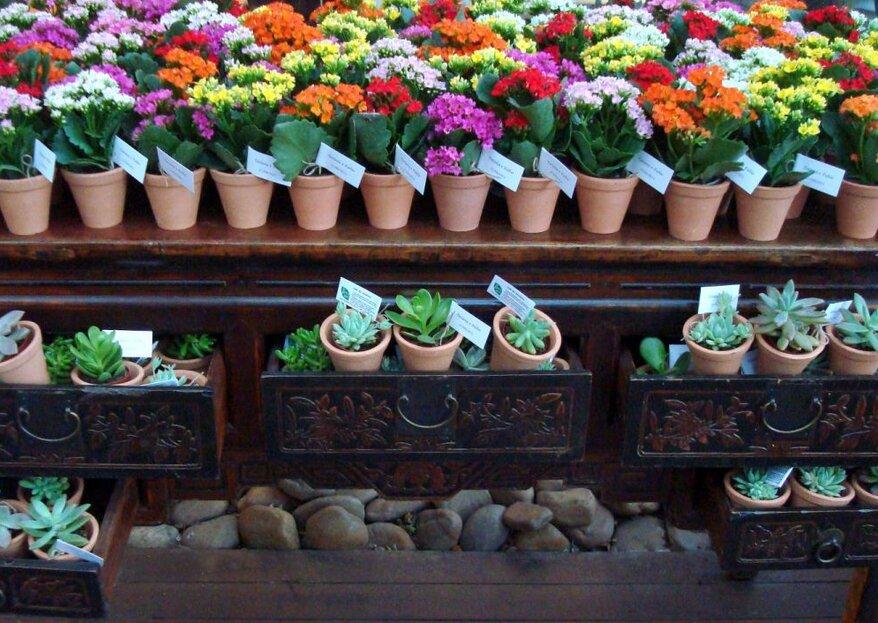 Fiori e piante come bomboniere per il tuo matrimonio: piaceranno a tutti!