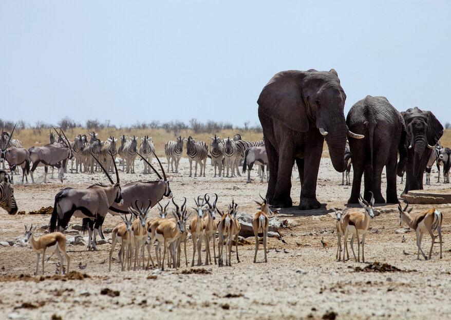 Lua de mel em Botswana: um tesouro para você desbravar na África!