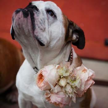 Foto de Lauren Ross Photography en Style Me Pretty