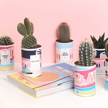Assortiment de cactus Ay Cactus - Crédit photo: aycactus.fr