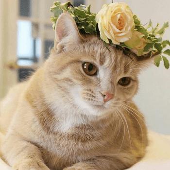 Photo et couronne de fleurs : @allgrandevents Instagram