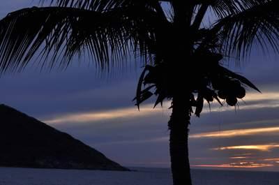 Celebra tu boda con una atmósfera tropical ¡y directo en el paraíso!