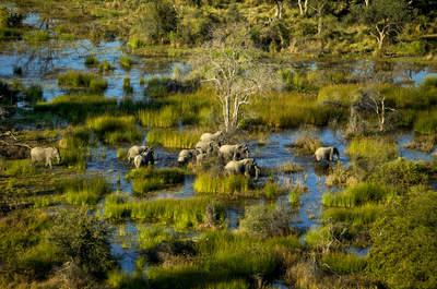 Hochzeitsreise in Botswana: ein verborgener Schatz in den Tiefen Afrikas
