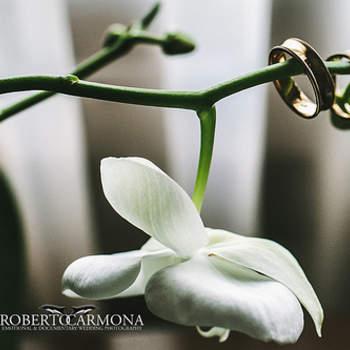 En Zankyou hicimos una selección de las fotografías de anillos de bodas que más nos gustan. ¡Disfrútenla! Foto de Roberto Carmona
