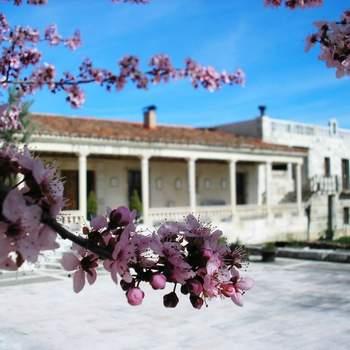 En la provincia de Segovia, a una hora de Madrid, se encuentra este antiguo palacio, rehabilitado como finca y hotel para albergar todo tipo de eventos. Celebra tu boda civil o religiosa en un entorno privilegiado con una gastronomía cuidada y una carta a medida para no dejar indiferente a tus invitados.