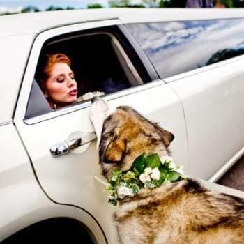 Como melhor amigo do homem, não é estranho vermos cães de estimação participando do dia mais importante da vida de seus donos! Mas como uma data especial, eles precisam estar vestidos para a ocasião! Veja estes lindos modelos de coleiras para deixar seu amigo peludo lindo para o casamento!