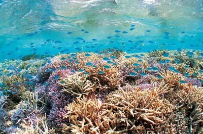 Okinawa, les îles paradisiaques que cache le Japon