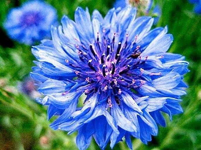 Las flores azules son preciosas para crear ramos de novia