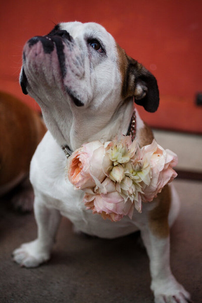Perros pajesitos de boda. Foto de Lauren Ross Photography en Style Me Pretty