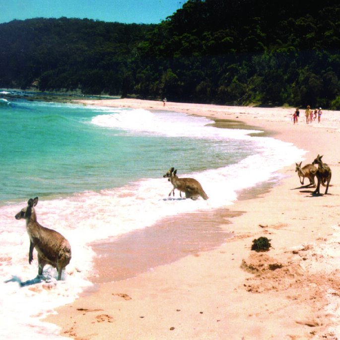 Pebbly Beach. Foto: Vacanze Australia