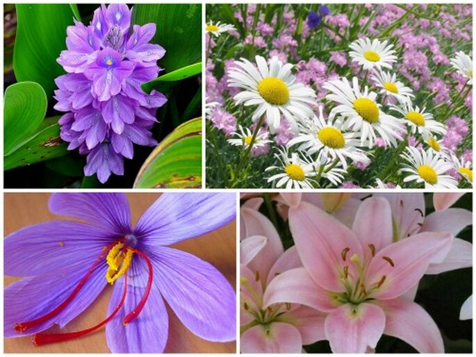 Jacintos, margaritas, flor de azafrán y lirios, flores silvestres para novias