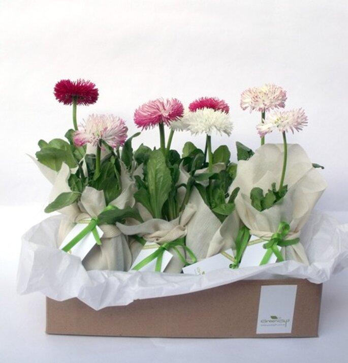 Flores Con Conciencia Ecol  Gica Para Bodas  De Green T