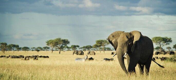 Singita Safari Lodges
