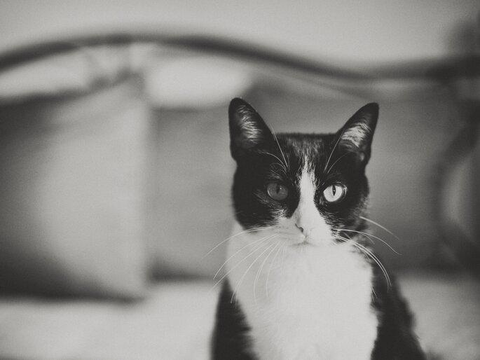 Foto de Sonho
