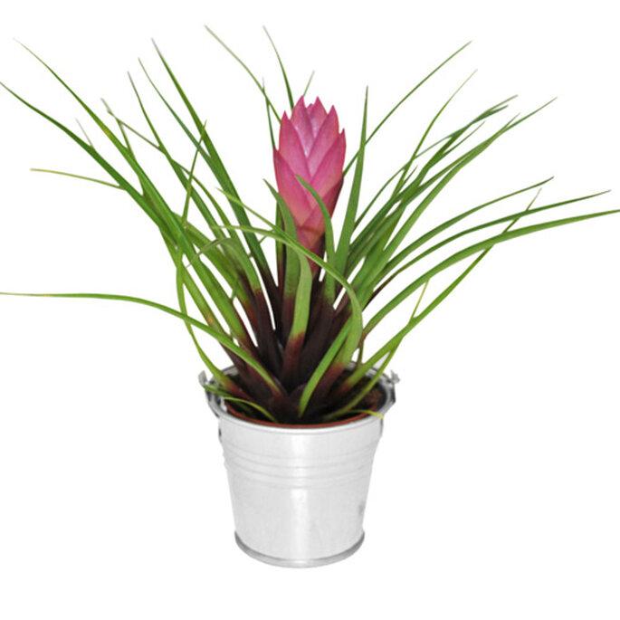 Choisir vos cadeaux d invit s selon votre th me de mariage for Mini plante verte