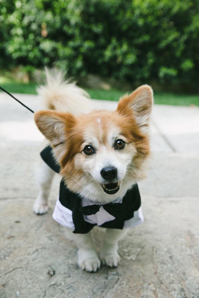 10 motivos para llevar a tu mascota a la boda. Foto- Onelove Photography