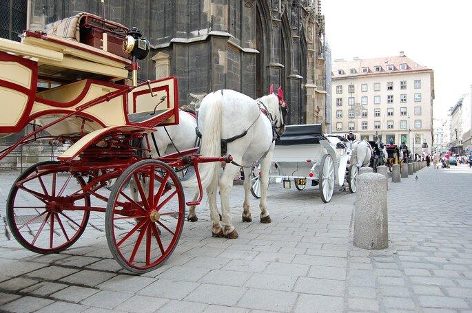 Charrete com cavalos em Viena de Aústria